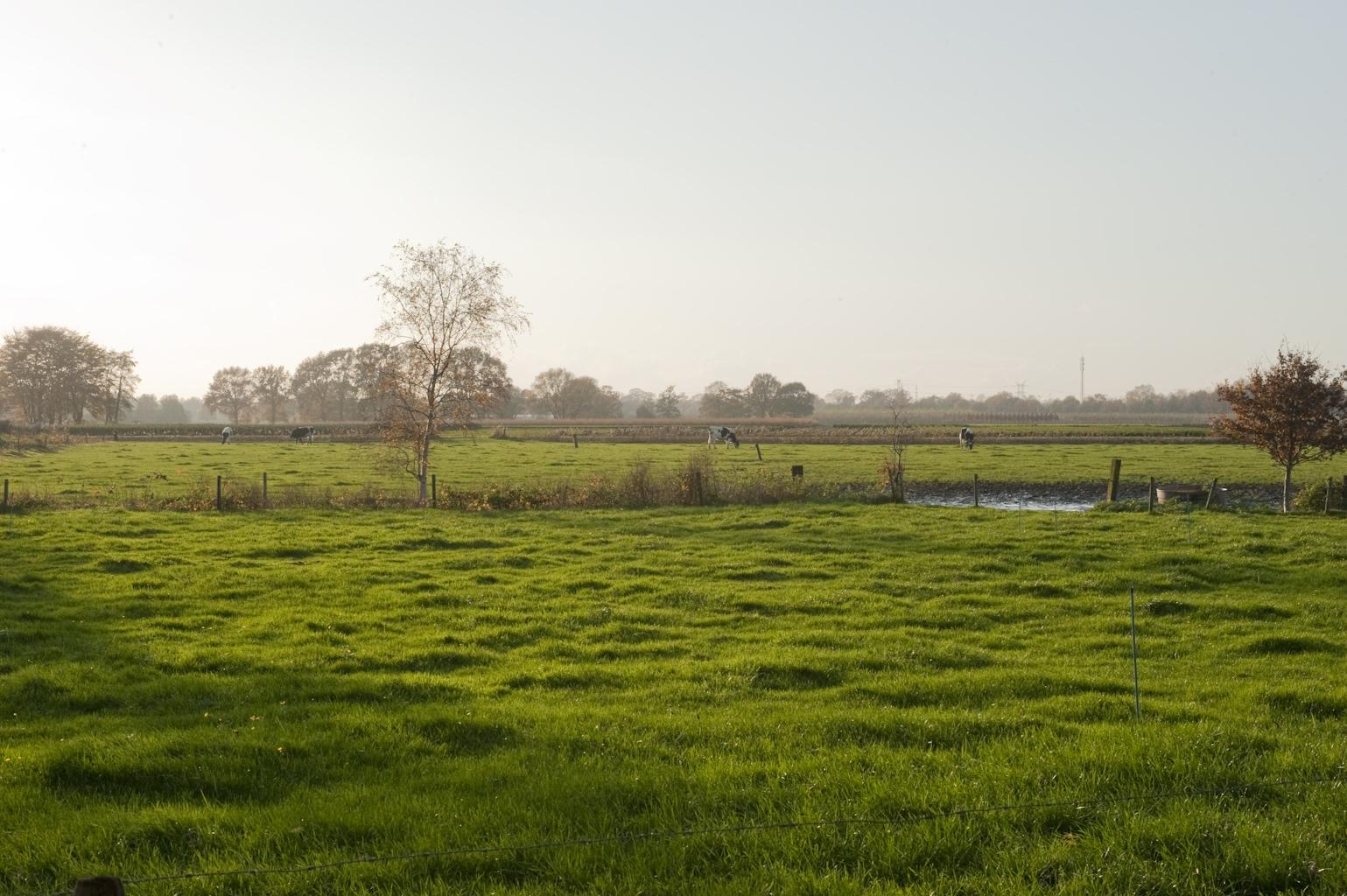 Deltaplan voor het landschap groene woud - Foto van keukenuitrusting ...